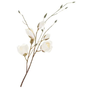 Magnolie bílá, plast